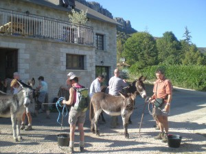 Randonnées à dos d'âne Mont Aigoual, Cévennes, Lozère